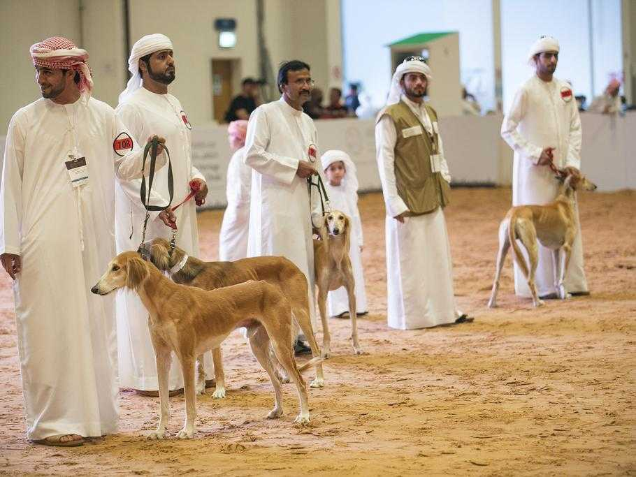 Arabian Saluki Centre, Abu Dhabi | Timings | How to Reach