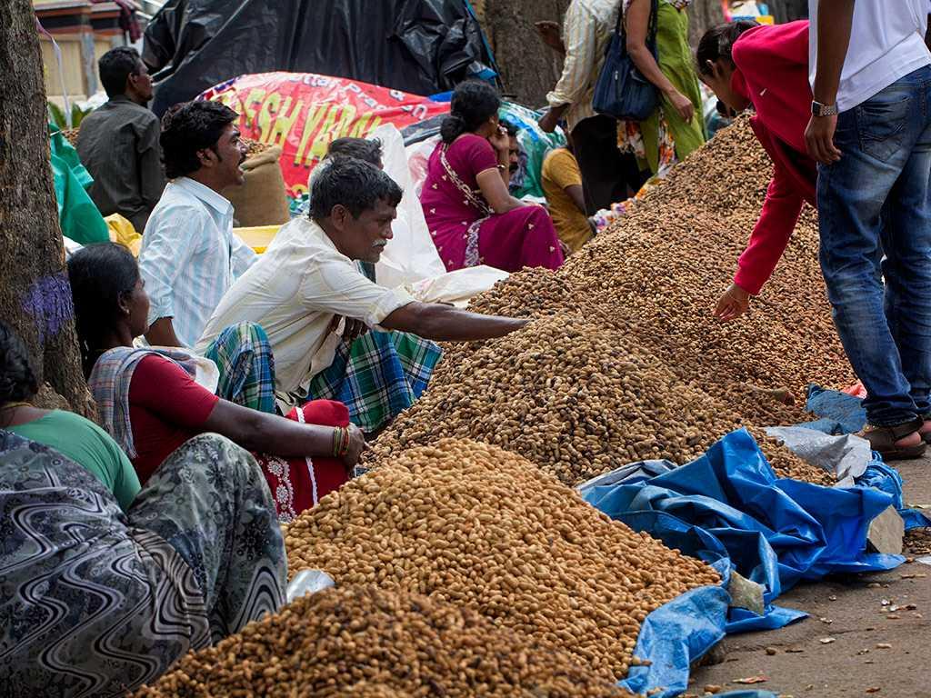 Groundnut Festival, Festivals of Bangalore