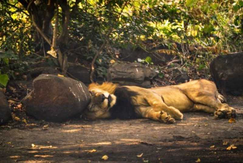 Sanjay Gandhi National Park, Places in Mumbai for Kids