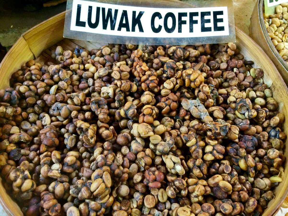 excreted coffee beans