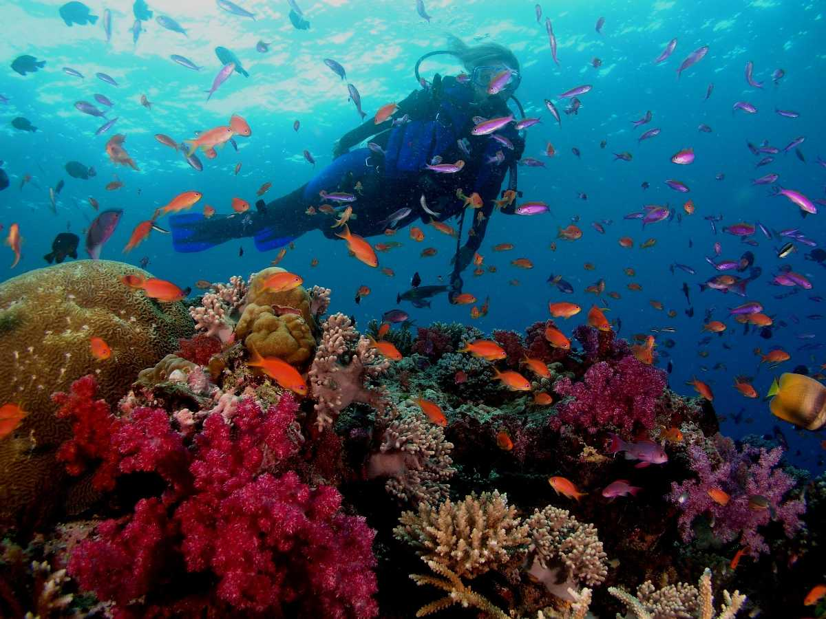 adventure sports goa, scuba diving and snorkelling in goa, adventure activities in goa