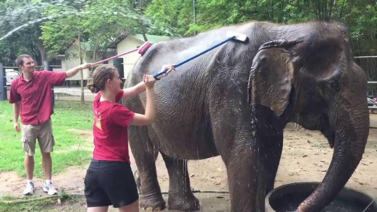 Wildlife Friends Foundation, Elephants In Thailand