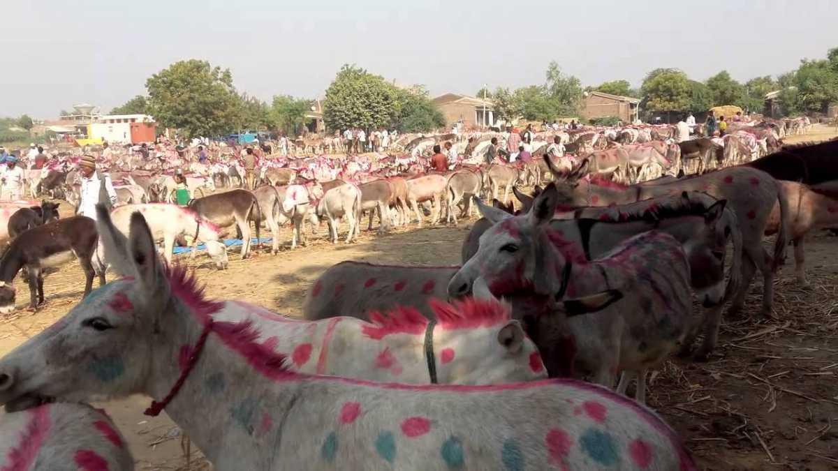 Vautha Mela, Festivals Of Gujarat