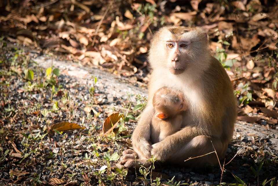 Lampung Monkey Forest, Bandar Lampung