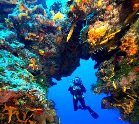 Palancar reefs diving spot
