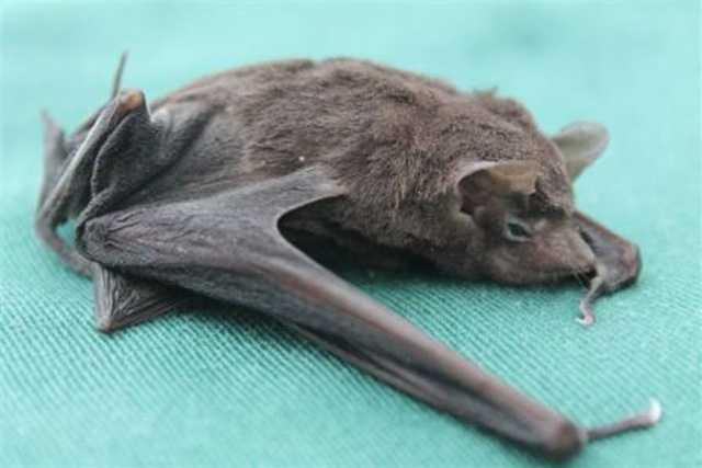 Seychelles sheath-tailed bat, National Parks in Seychelles