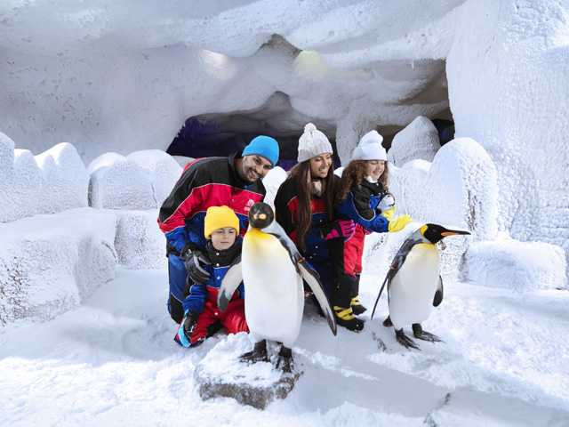 Penguins at ski dubai