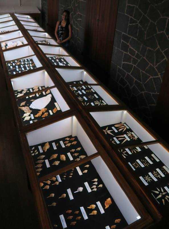 Display of Seashells, World of Seashells