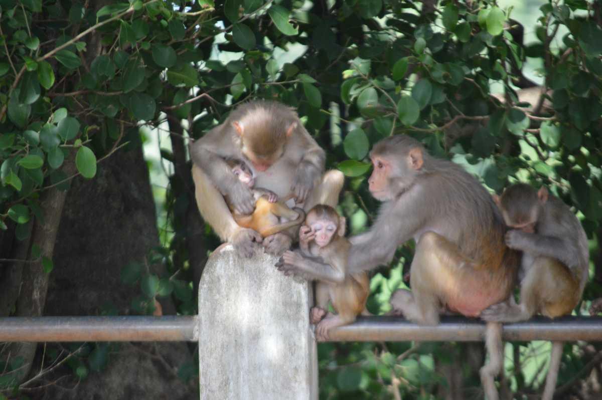 Monkeys at Kanger Valley National Park