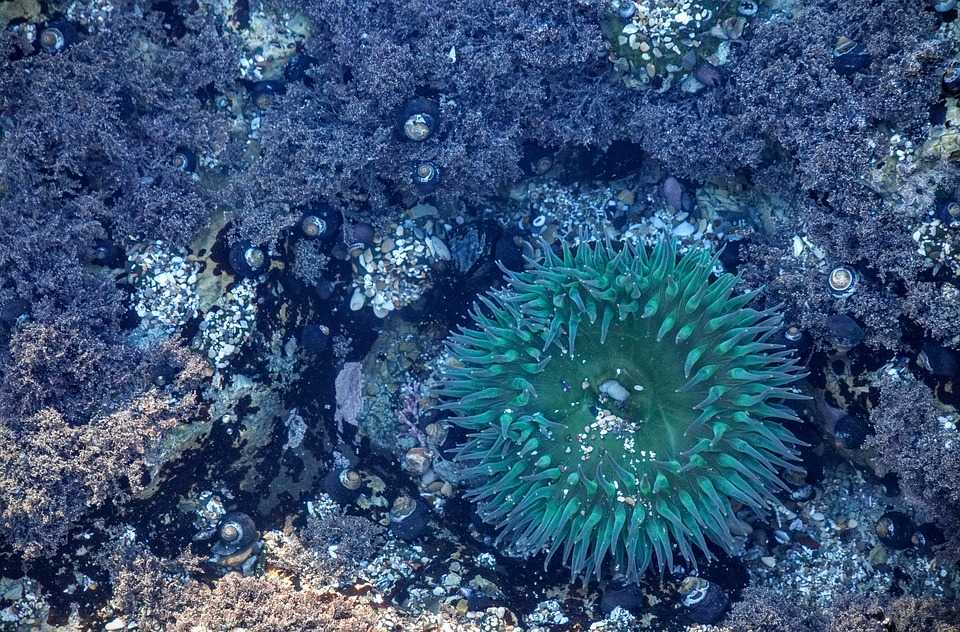 Anemone Reef, Scuba Diving in Phuket