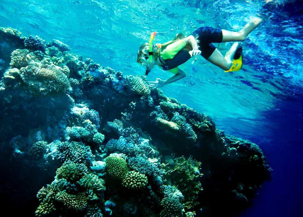 Scuba Diving with Nemo