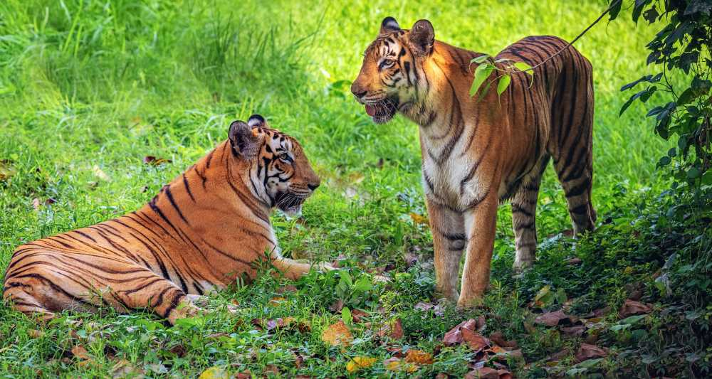 The Sambhar Tiger Sanctuary