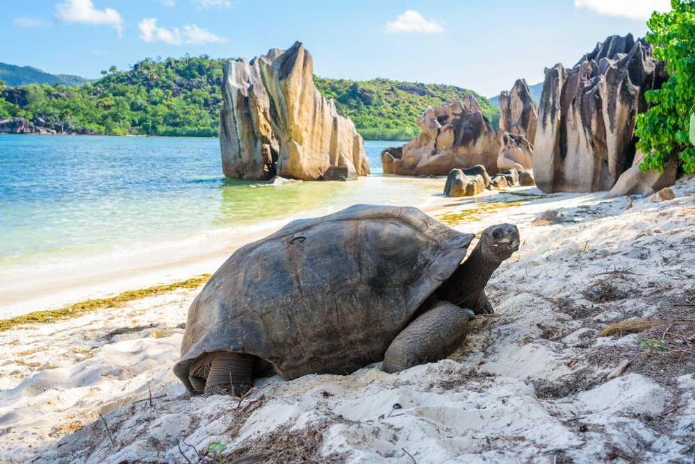 Tortoises on Curieuse Island