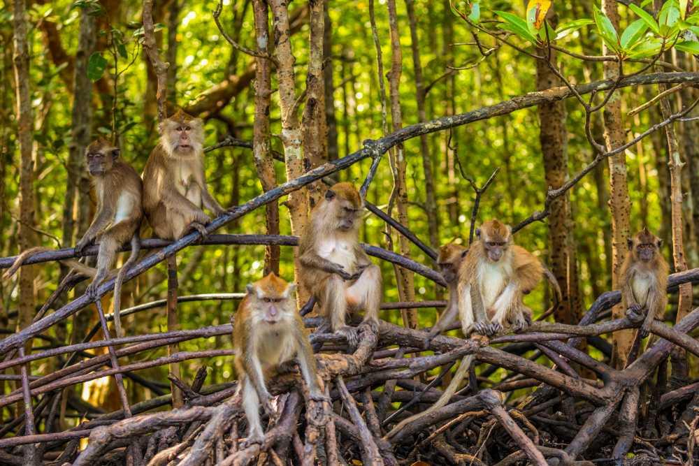 Tour the Wildlife Park & Bird Paradise