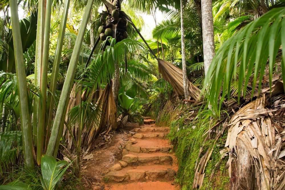 Strolling Trails At The Vallée de Mai