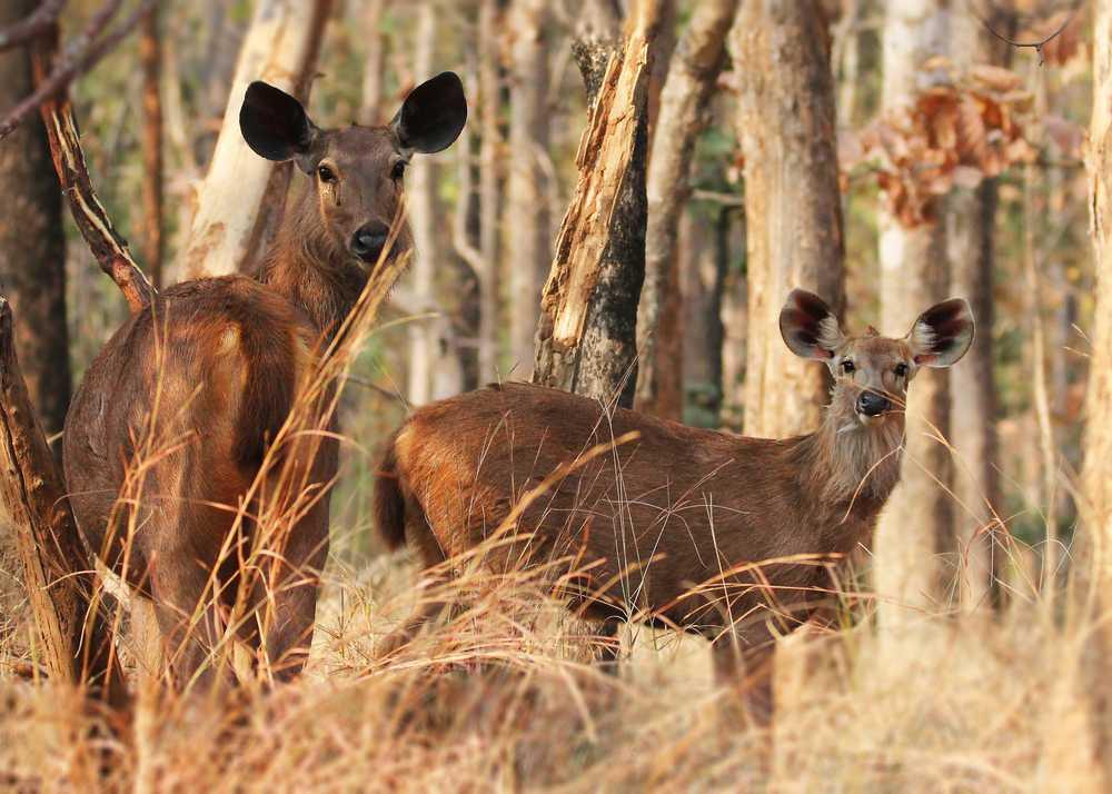 The Sambhar Wild Life