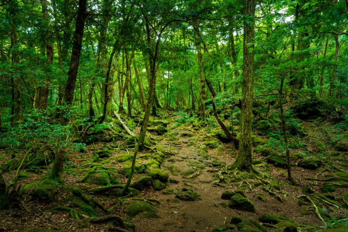 Aokigahara Forest, most Haunted places in the world