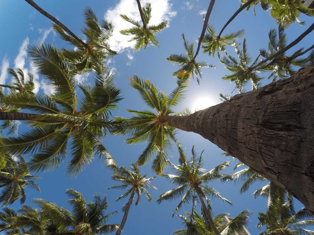 Kerala Coconut trees, Facts about Kerala