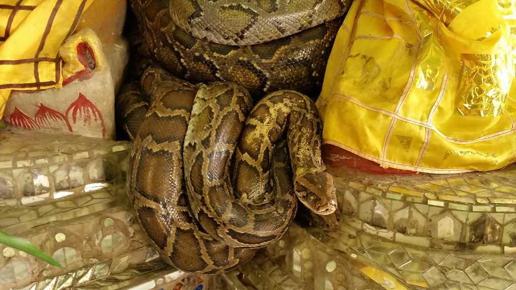 Snake Temple in Penang