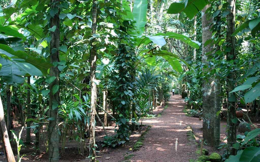 Spice Gardens