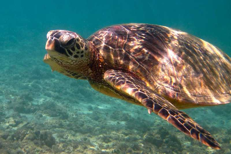 Hawskbill Turtle, National Parks in Seychelles