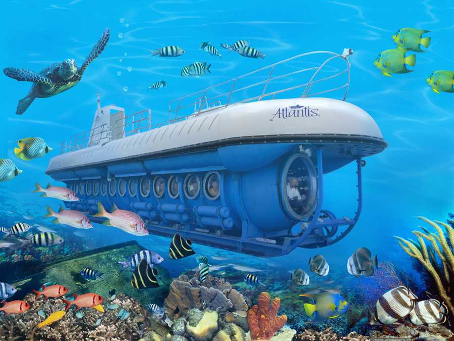 Enjoy on a whale submarine in Maldives with kids