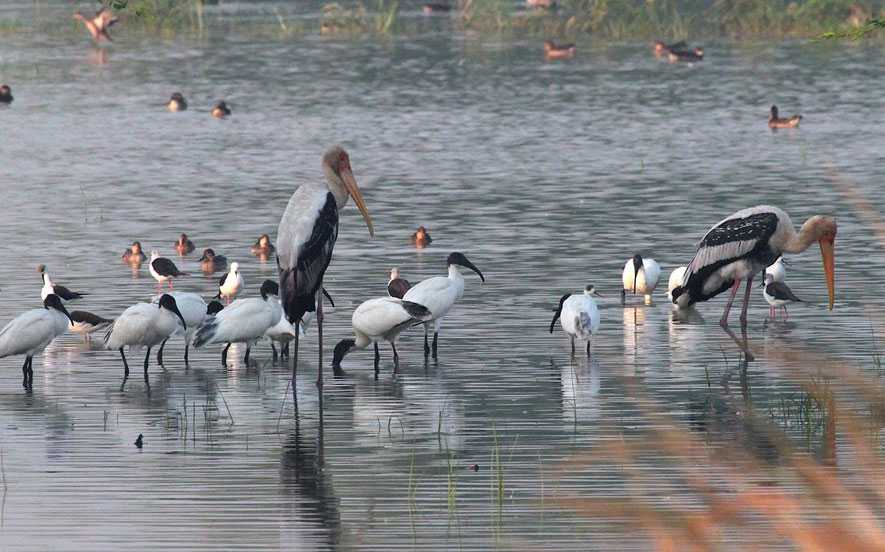 Sultanpur Bird Sanctuary (Gurgaon) - Timings, Ticket Price, Best Time