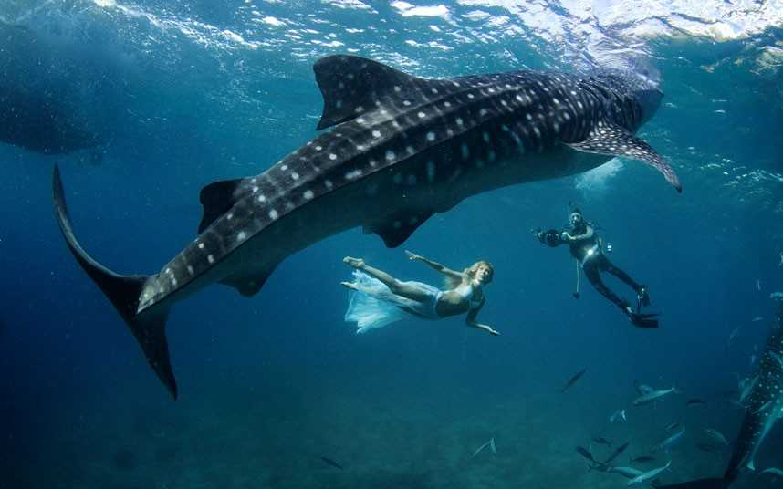 Tips For When You Spot A Whale Shark, Whale Sharks In Thailand