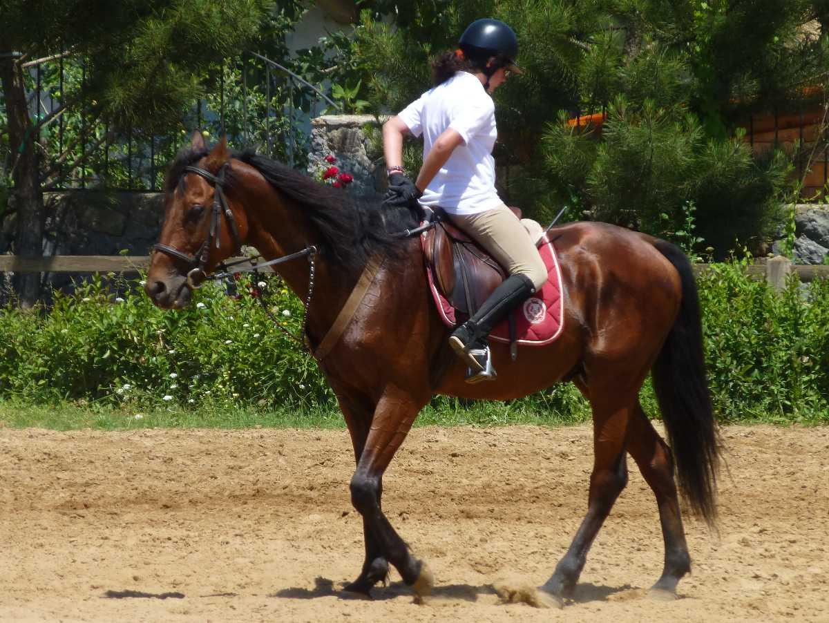 Horse riding in Hong Kong