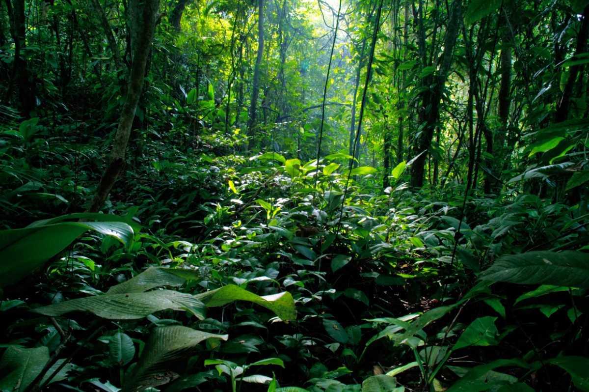 9 National Parks in Tamil Nadu | Wildlife Sanctuaries, Bird