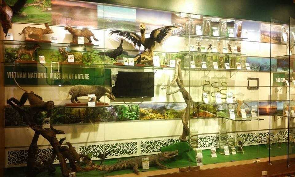 Vietnam National Museum of Nature