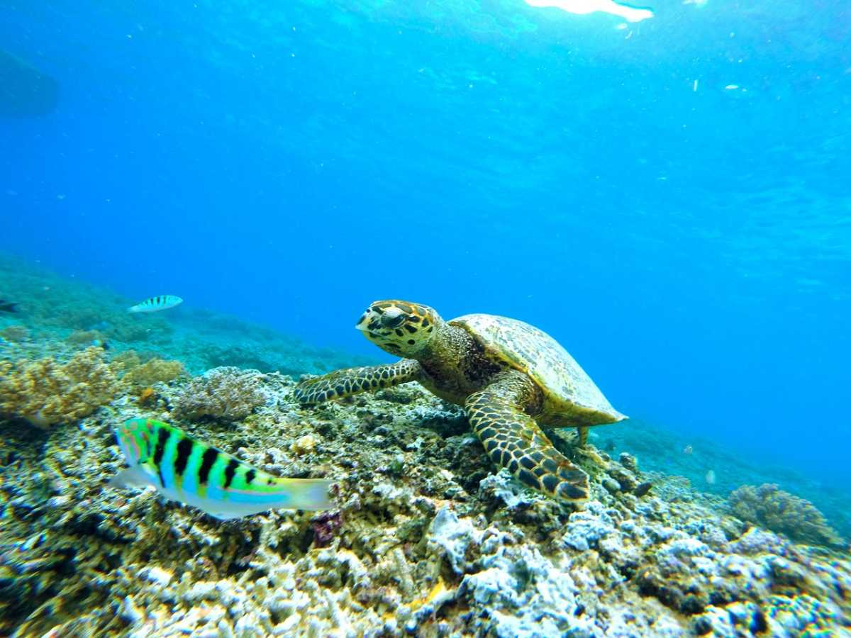 Turtle Reef House, Scuba diving in Mauritius