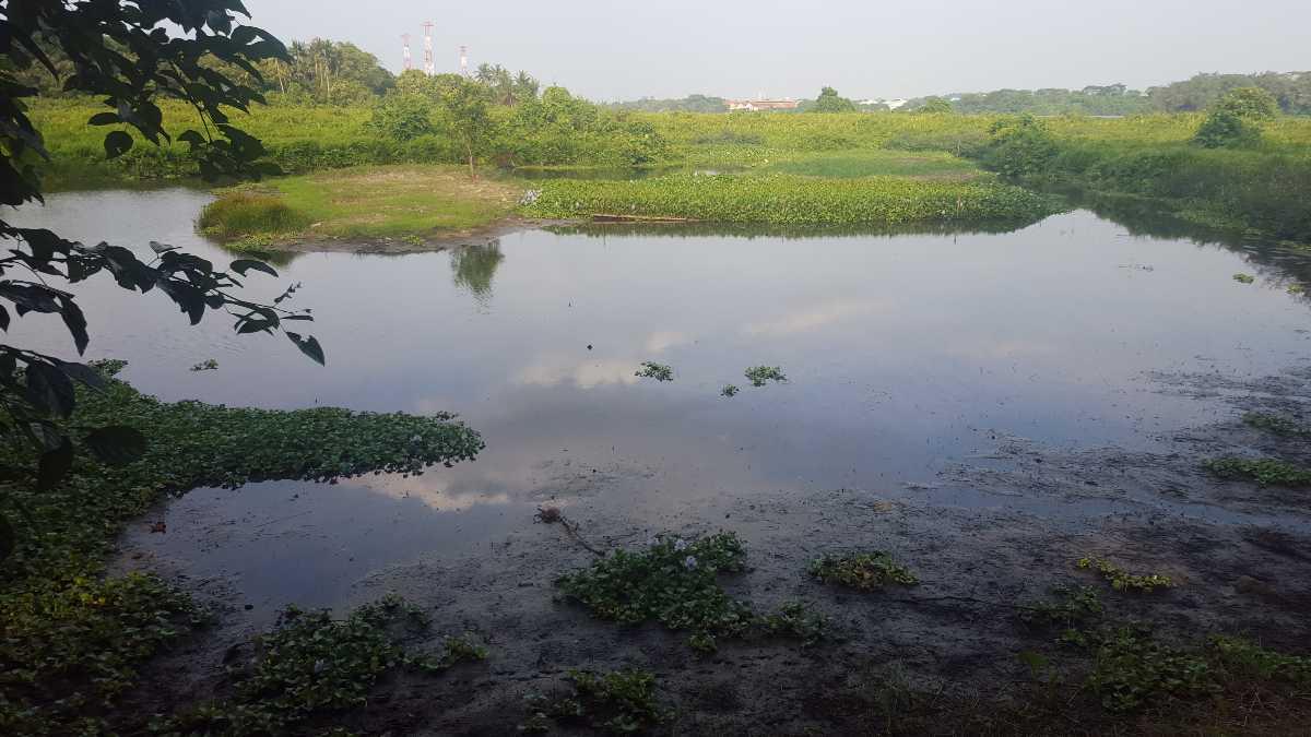 Kranji Marshes, Wildlife in Singapore
