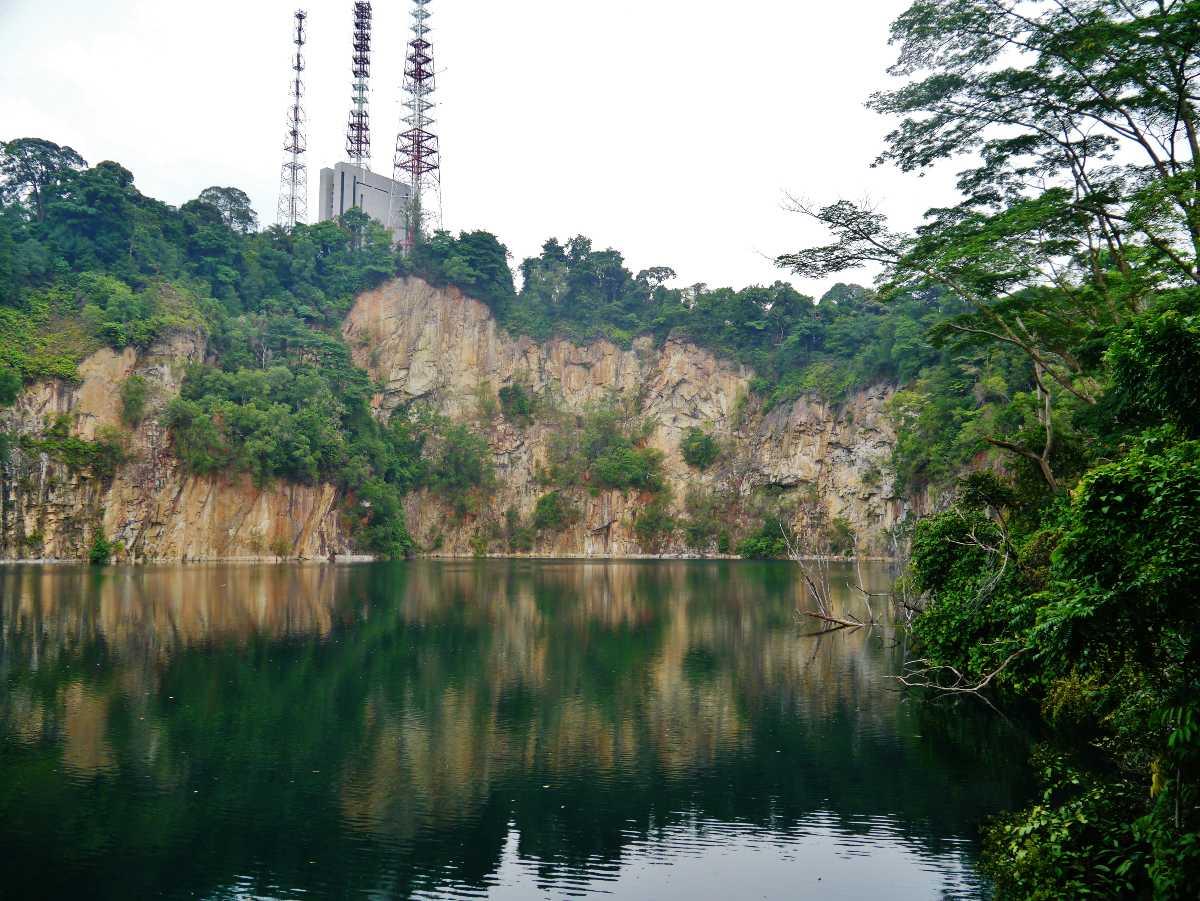 Bukit Timah National Park, Wildlife in Singapore