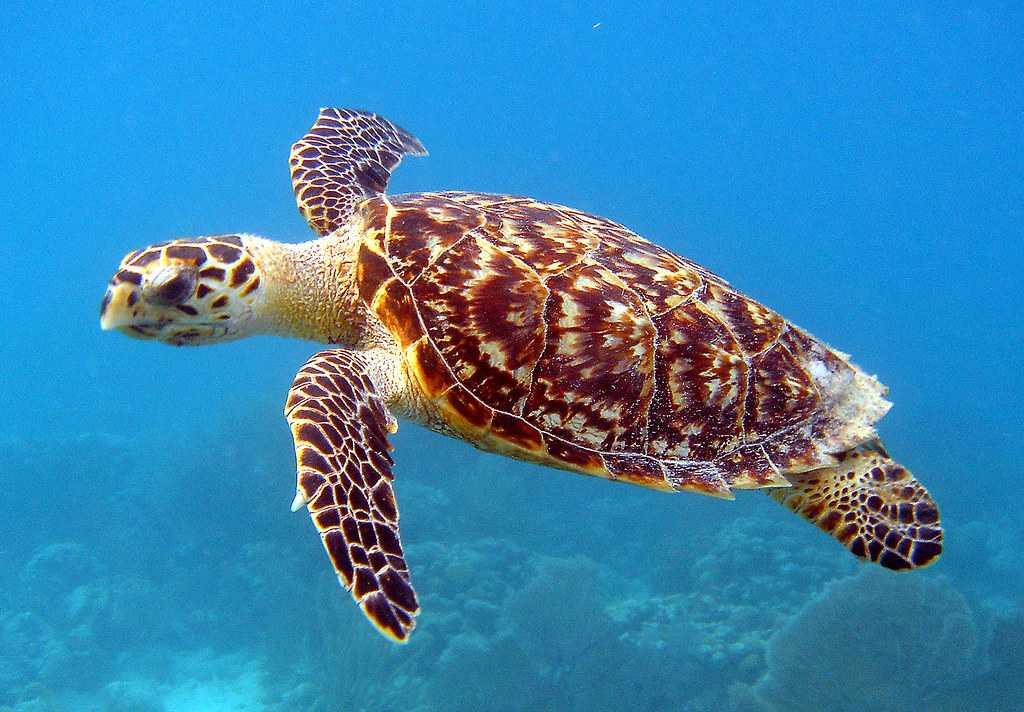 Sea Turtle, Wildlife in Singapore