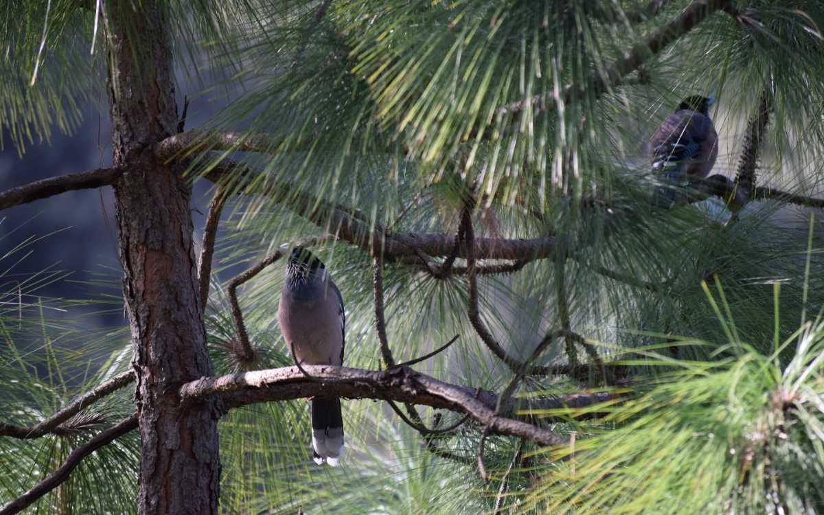 Facilties in Mrugavani National Park
