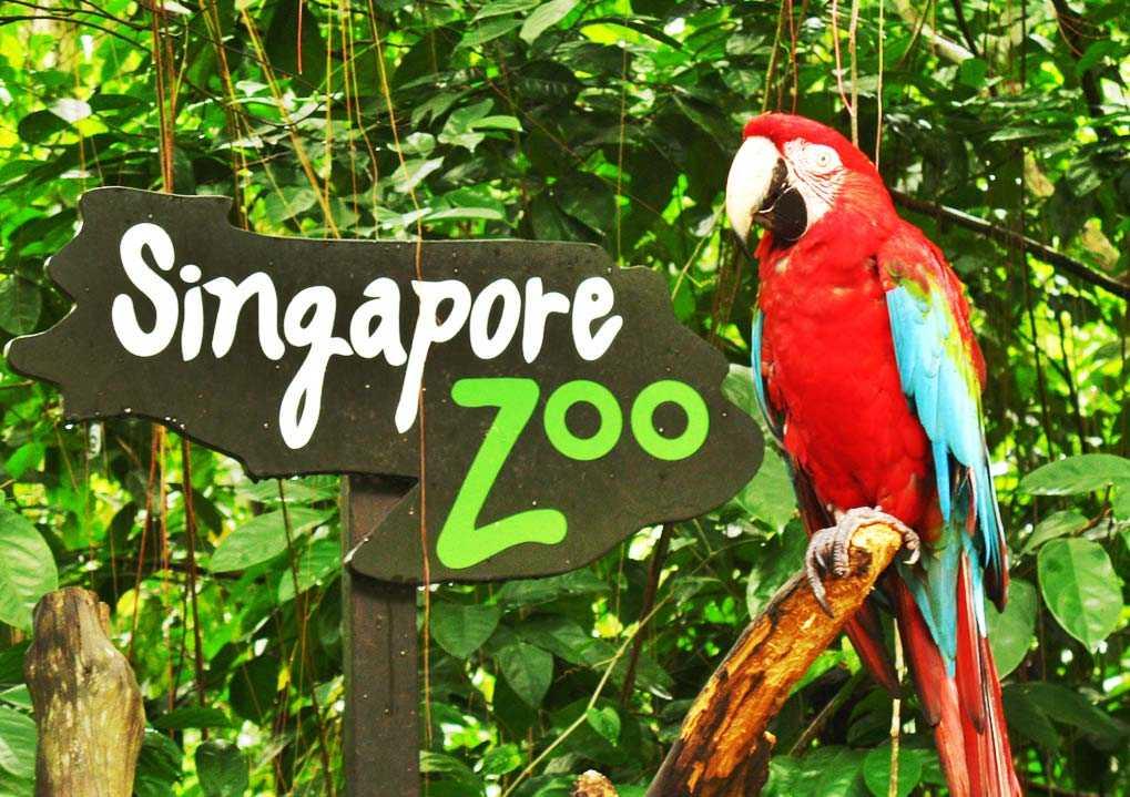 Singapore Zoo, Singapore with kids
