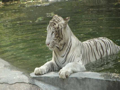 18 Zoos In India – Most Popular Zoological Parks In India