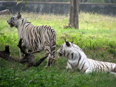 18 Zoos In India – Most Popular Zoological Parks In India - Holidify