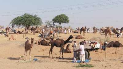 Mallinath Cattle Fair