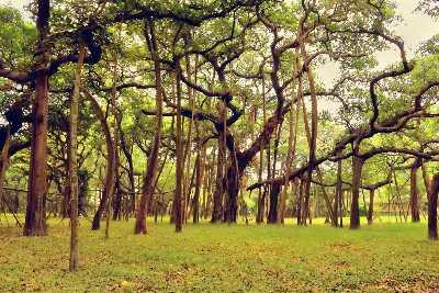Botanical Gardens in Kolkata