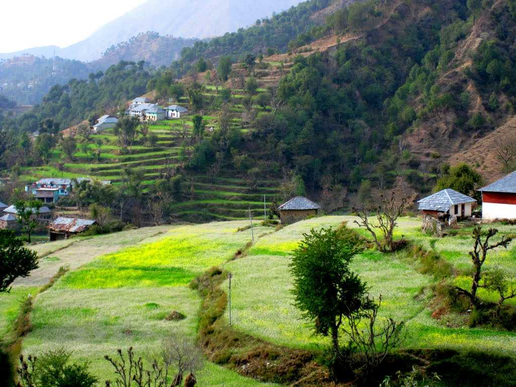 Places To Visit In Palampur Tourist Places And Things To Do In Palampur