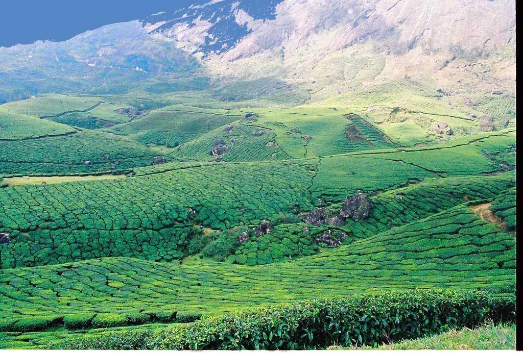 Tea and Spice Plantations, Devikulam| Tea and Spice ...