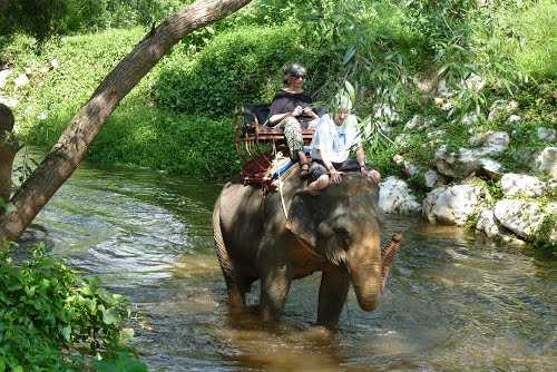 Elephant Rides, Goa Elephant Rides Photos and Timings