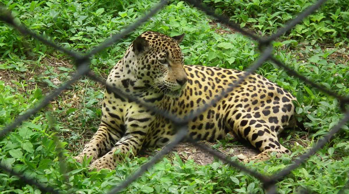 nehru zoological park Nehru zoological park was established in the year 1959 while it was opened to  the public on 6th october 1963 there has been many changes and additions.