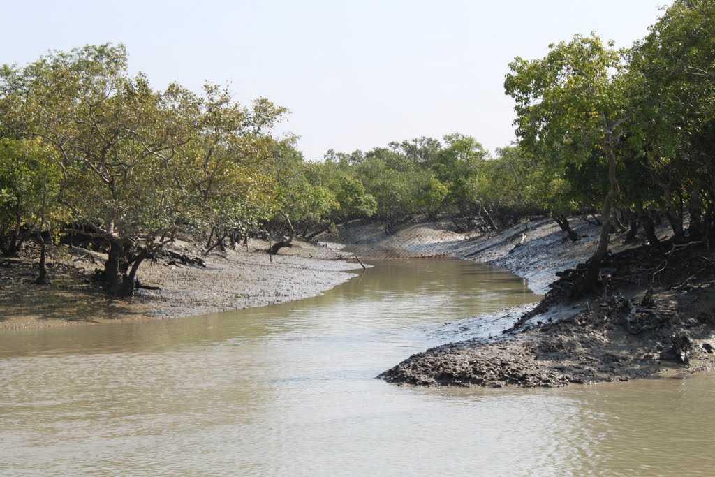 Welcome to Kaziranga National Park & Tiger Reserve