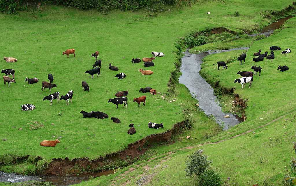 Indo Swiss Dairy Farm, Munnar (2019) - Images, Timings