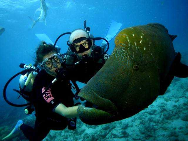 Khao lak tourism travel guide attractions tours packages - Where to dive in thailand ...